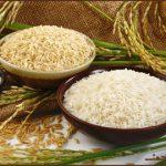 واژهشناسی: برنج