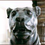ریشهشناسیِ واژهی سگ و ارجِ این جانور در فرهنگِ ایران